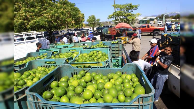 """Productores y empacadores de limón en Michoacán, son amenazados con """"multas"""" de $50 mil a $100 mil pesos si trabajan la fruta"""