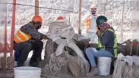 Sedena rescata 132 restos de mamuts en Aeropuerto San Lucia