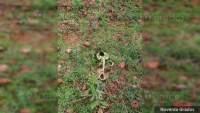 Localizan restos de tres cuerpos humanos en un cerro en Tangancícuaro