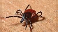 En alerta máxima China por virus que transmiten las garrapatas