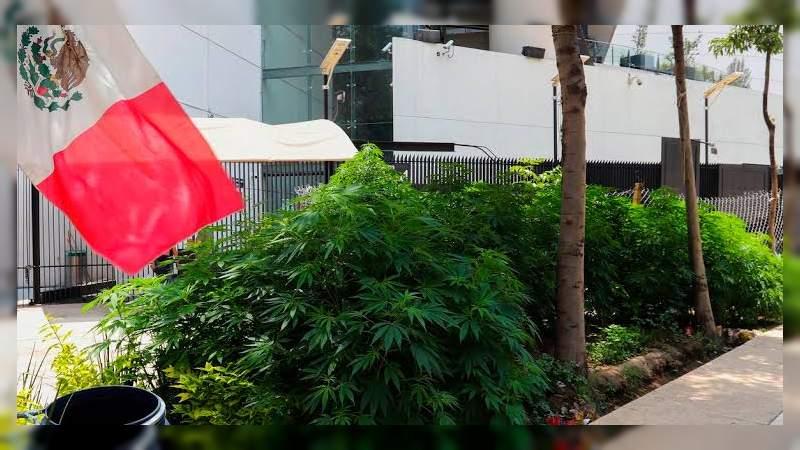 Gran mayoría en el Senado aprueba legalización de la marihuana para uso lúdico