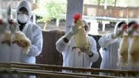 Rusia confirma primer caso de transmisión de cepa H5N8 de la gripe aviar a seres humanos