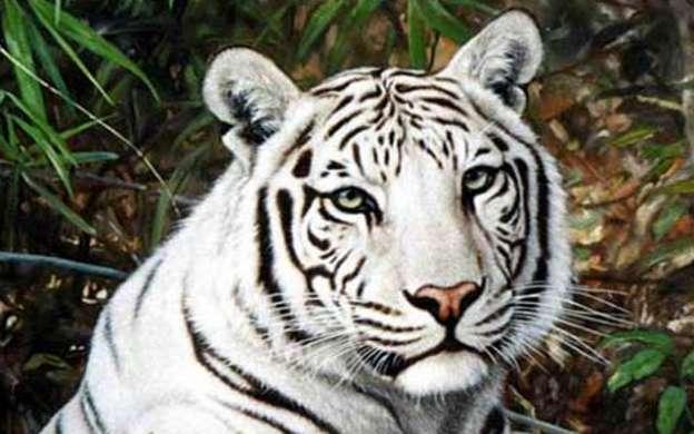 leon y tigre blanco - photo #7