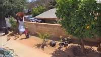 Captan en video a joven luchando con una Osa para defender a sus perros