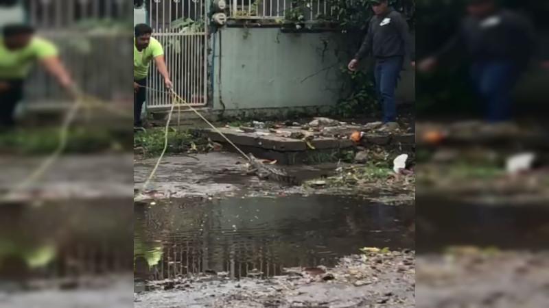 Reportan presencia de decenas de cocodrilos a causa de tormenta tropical en Lázaro Cárdenas