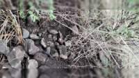 Hallan cadáver semienterrado en Jacona, Michoacán