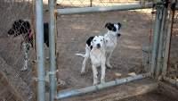 En La Piedad, Michoacán, continúa vacunación antirrábica canina y felina