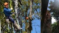 Poda preventiva de árboles en el Parque Nacional