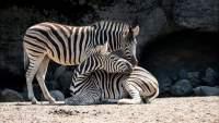 Diputado de Morena propone prohibir los zoológicos en la CDMX