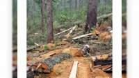 En cuatro estados de la República organizaciones delincuenciales controlan la tala ilegal de bosques