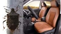 Plaga de chinches amenaza el sector automotriz