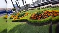 Parques y Jardines de Uruapan trabaja en instalación de plantas de cempasúchil