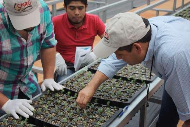 Capacita conafor a 17 estados de manejo de plagas y for Manejo de viveros forestales