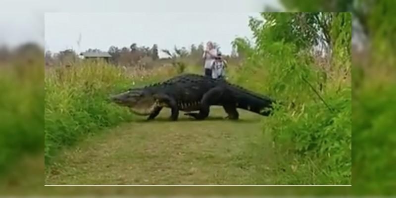 Graban a cocodrilo de 4.5 metros de largo