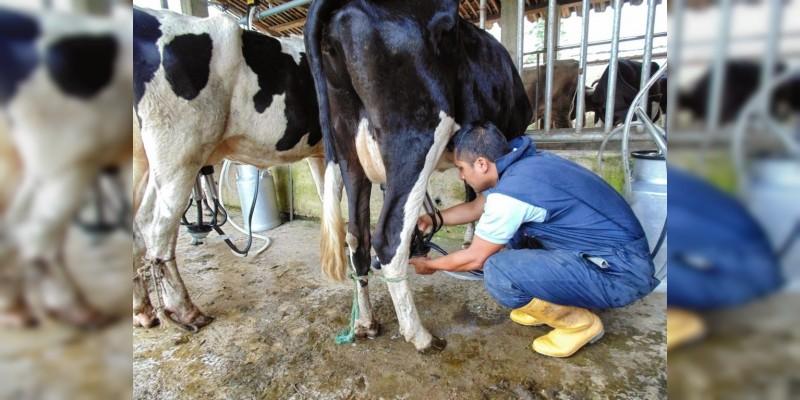 Michoacán produce más de 121 millones litros de leche: Sedrua