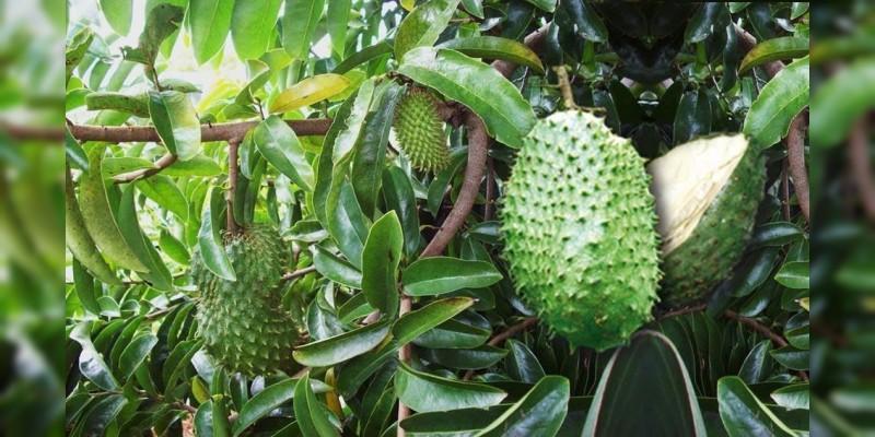 Michoacán, tercer productor nacional de guanábana: Sedrua