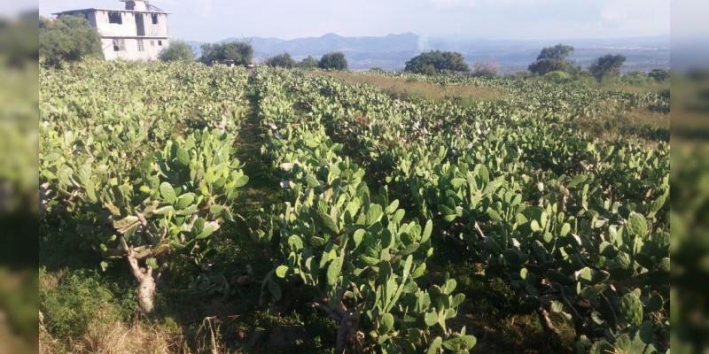 Morelia destaca por su vocación agropecuaria