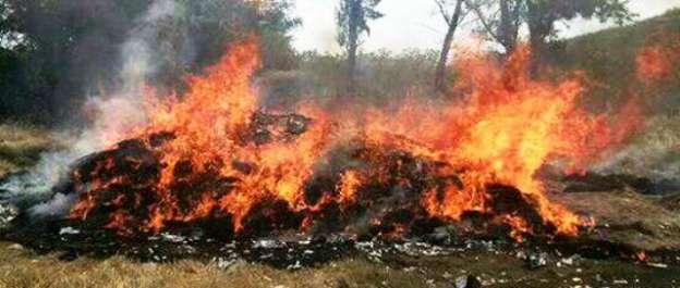 Localizan e incineran casi 150 toneladas de marihuana en Nayarit