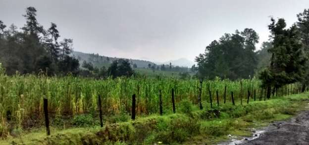 Granizada afecta cultivos en Uruapan, Michoacán