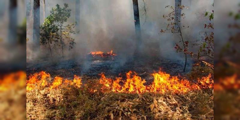 Michoacán se encuentra en segundo lugar en registro de incendios a nivel nacional, reconoce Conafor