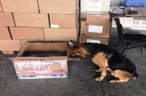 Aseguran más de medio kilo de heroína en el Aeropuerto de Tijuana, Baja California