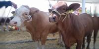 Van 59 mdp para campañas de salud animal: Sedrua