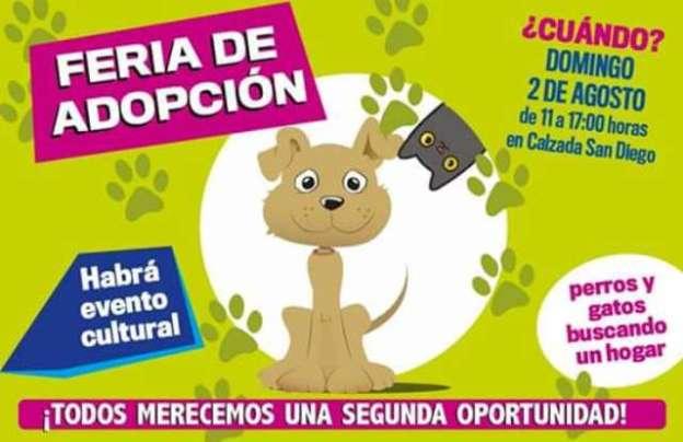 Este domingo se realizará Feria de Adopción de Mascotas en Morelia