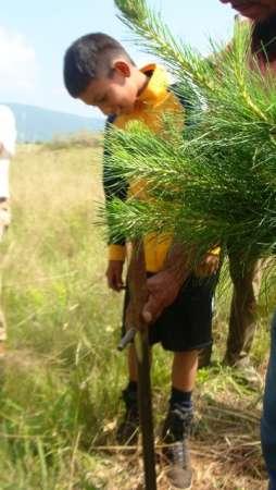 Con 20 mil árboles plantados, arranca campaña de reforestación en Michoacán
