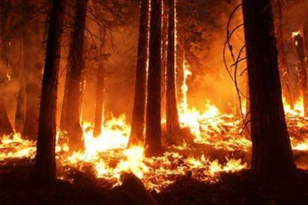 Declara California estado de emergencia por incendios forestales