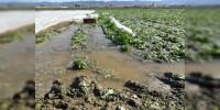 Llama Sedrua a productores, a asegurar sus cultivos