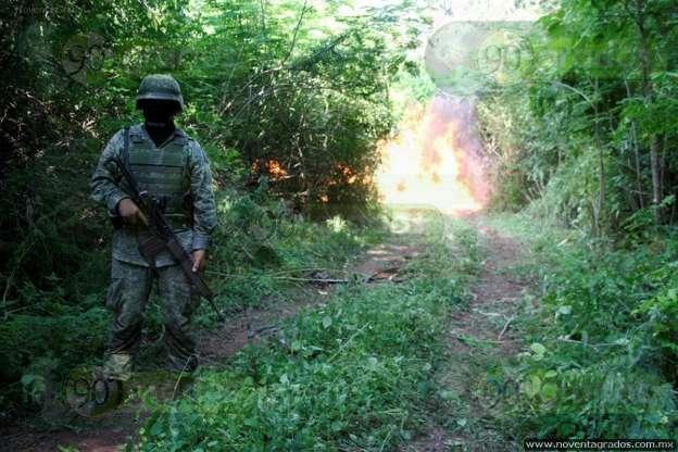Aseguran narcolaboratorio, plantíos de marihuana y droga sintética en Tocumbo, Michoacán