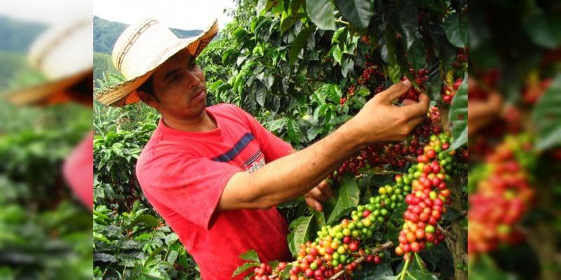 Sector cafetalero en México recibirá mil 200 millones de pesos en 2018