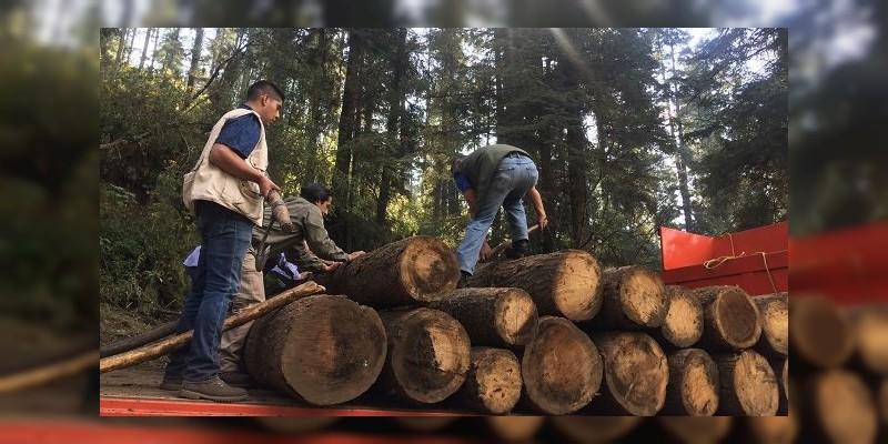 Detienen a cuatro personas con madera talada ilegalmente, en Michoacán