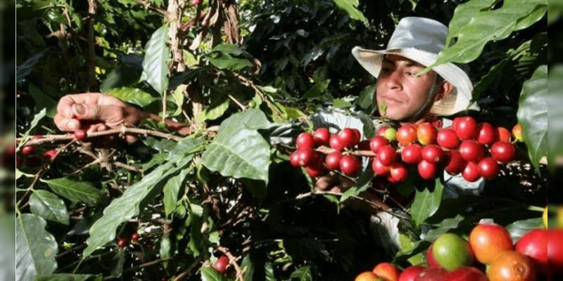 Recupera México posición en los planos nacional e internacional en café: Sagarpa
