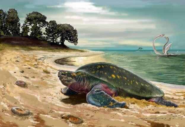Describen a la tortuga marina más antigua conocida hasta ahora: tiene 120 millones de años