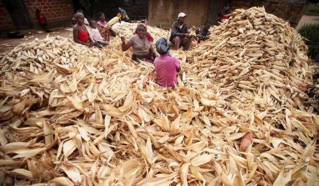 Señala FAO descenso del volumen de intercambios comerciales y de la volatilidad en productos básicos agrícolas
