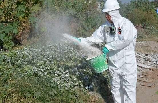 Ayuntamiento de Morelia emprenderá acciones contra mosquito en panteones