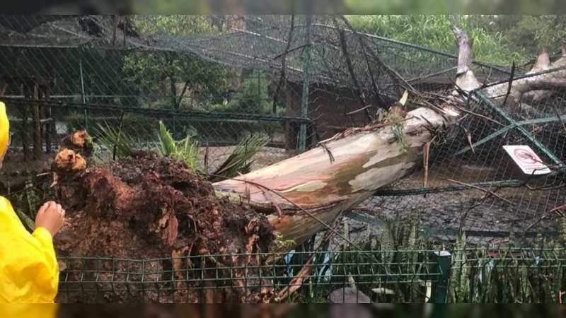 Fuertes lluvias provocan la caída de árboles en Morelia