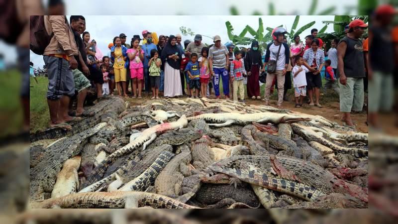 Masacran a casi 300 cocodrilos para vengar la muerte de un vecino