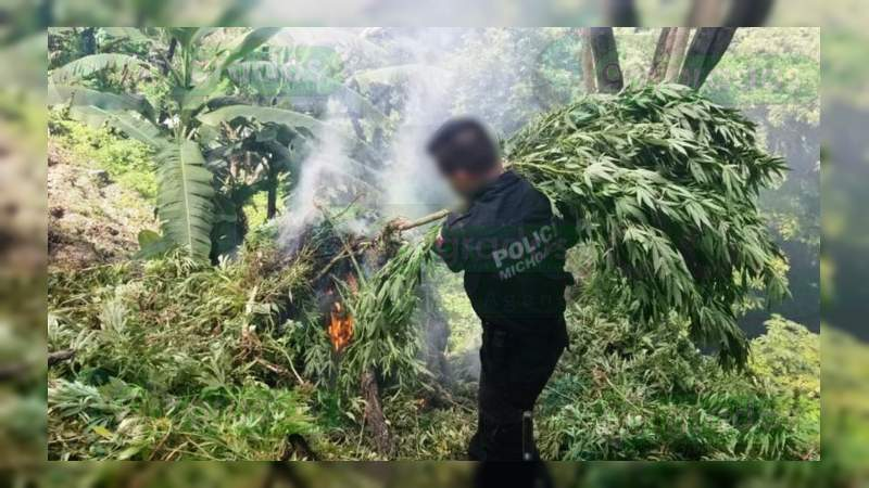 Siete detenidos, armas aseguradas y un sembradío destruido en operativos en Michoacán