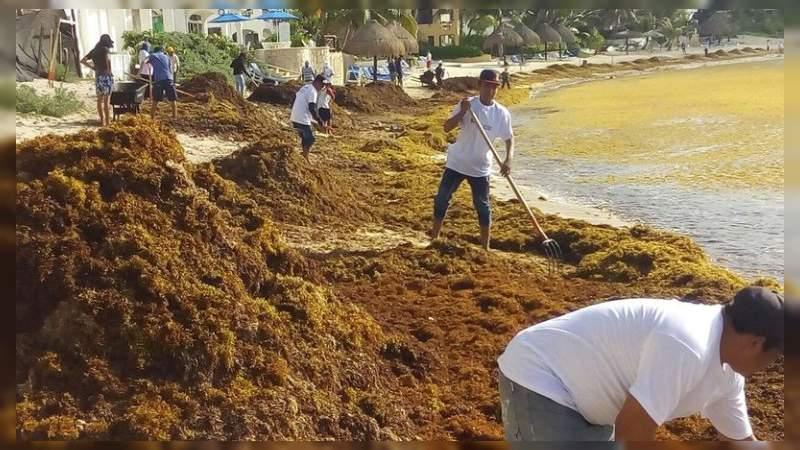 Urgente un plan integral para evitar desastre ecológico por sargazo: Académica