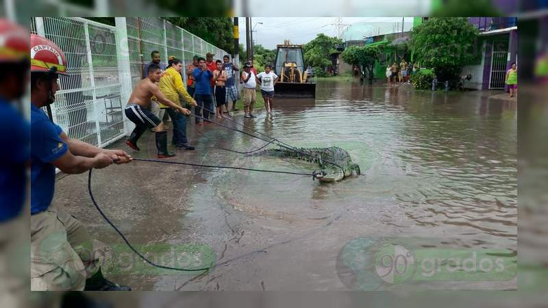 Intensa lluvia en Lázaro Cárdenas provoca inundaciones y fuga de cocodrilos
