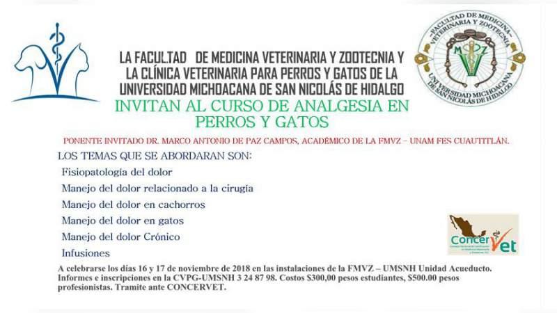 Ofrece UMSNH Curso de analgesia en perros y gatos