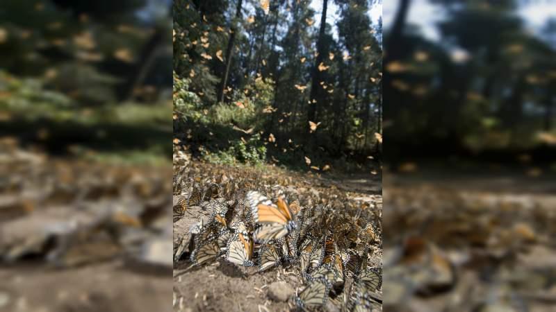 Sectur Michoacán te invita a conocer a la mariposa Monarca