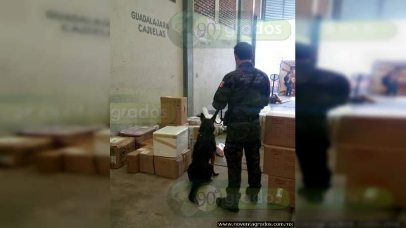 Aseguran 24 kilos de cocaína en paquetería en León, Guanajuato