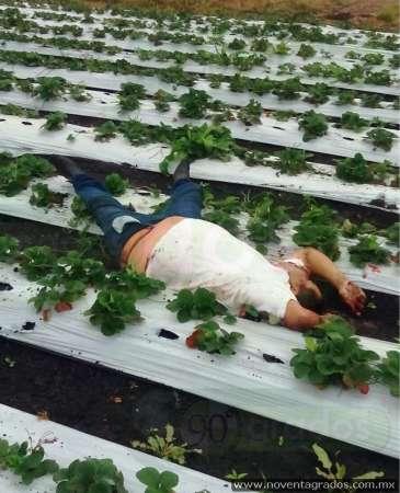 Identifican cadáver de asesinado en plantío de fresas en Zamora