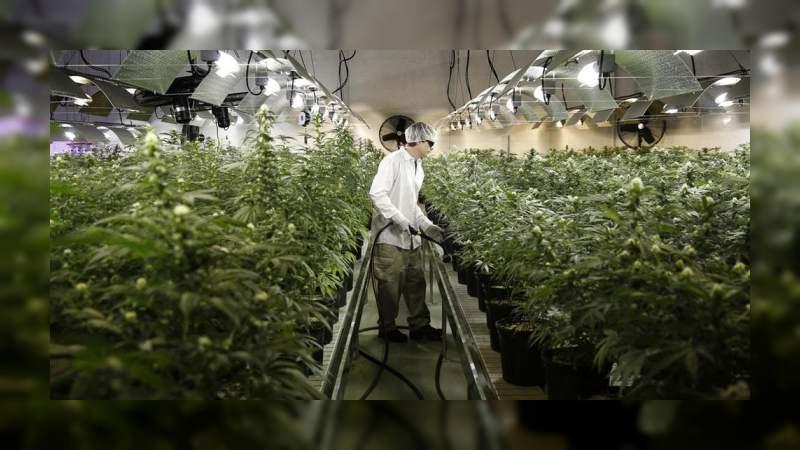 Industria de la marihuana creará 250 mil empleos en 2020 en Estados Unidos