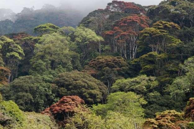 Los bosques serán un instrumento de lucha climática