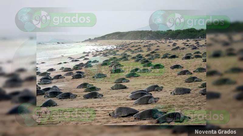 Detienen a mujer con 7 mil huevos de tortuga en Acapulco, Guerrero