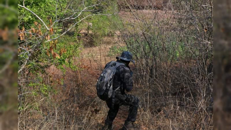 Derriban más de mil 400 árboles en Zacapu y Panindícuaro